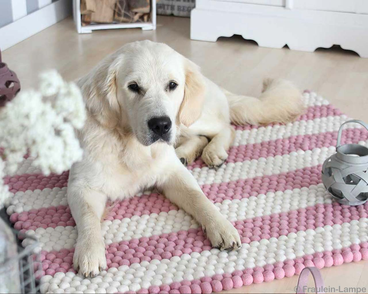 Stripes Carpet Wool Labrador Dog 2